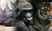Dozens of Animal Species Are Being Given Protection (Video)