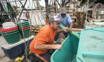 Gulf Coast Seafood Biz Slammed by Freshwater From Floods