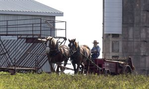 Former Ontario Amish Farmers Find Paradise on PEI
