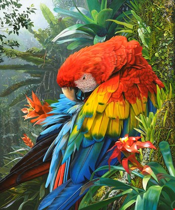First Place Animal Category: Jewel of the Amazon. (Stephen Jesic)
