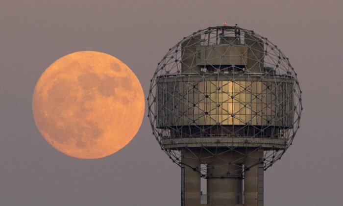 The moon rises behind Reunion Tower in downtown Dallas on the evening of Nov. 13, 2016. (Tom Fox/The Dallas Morning News via AP)