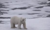 Melting Arctic Ice Could Have Major Consequences for Earth (Video)