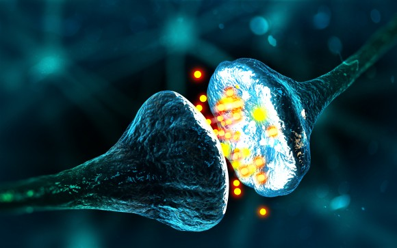 A synapse and neural cells. (Andrii Vodolazhskyi/Shutterstock)