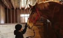 Meet Big Jake – The World's Tallest Horse (Video)