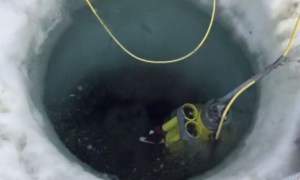 Antarctic Explorers Find Thriving Sea Creature Community Under the Frozen Landscape (Video)