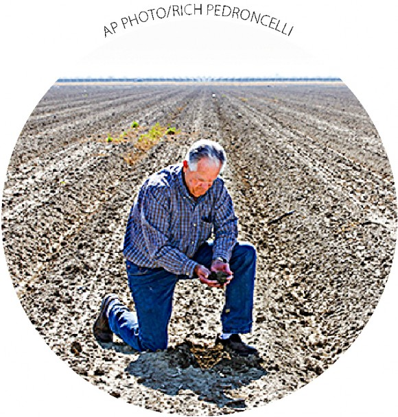 Mike Stearns, chairman of the San Luis & Delta-Mendota Water Authority, checks soil moisture levels near Firebaugh, Calif., on Feb. 25. Stearns had to fallow thousands of acres due to water cutbacks.