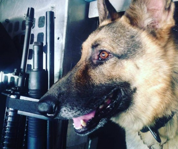 K-9 Max, rescued from euthanasia by Brad Croft. (Courtesy of Brad Croft)