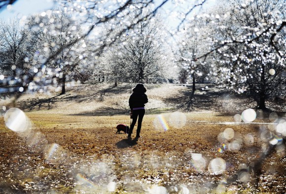 A woman walks her dog near ice-covered trees in Atlanta's Piedmont Park after a winter storm passed through on Jan. 7, 2017. Snow and sleet pounded a large swath of the U.S. East Coast on Saturday, coating roads with ice and causing hundreds of crashes. In Atlanta and parts of Georgia, people who were expecting a couple of inches of snow instead woke up to a thin coat of ice. (AP Photo/David Goldman)