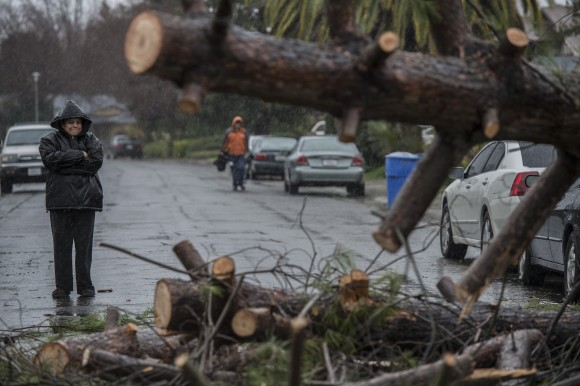 Rosie Salazar stands on Amapola Street after alerting neighbors that a tree had fallen and crushed two cars in Sacramento, Calif. on Jan. 8, 2017. Rivers are rising and winds are whipping up as a massive storm arrives in Northern California and is expected to push into Nevada by the evening. (Renee C. Byer/The Sacramento Bee via AP)