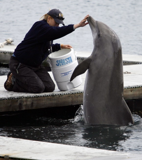 """A trainer (L) touches the nose of U.S. Navy dolphin """"Shasta"""" during a demonstration at the U.S. Navy Marine Mammal Program facility at Naval Base Point Loma in San Diego on April 12, 2007. (AP Photo/Denis Poroy)"""