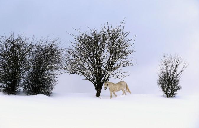 A horse walks through deep snow on its paddock near Ruderatshofen, Germany, on Jan. 15, 2017. (Karl-Josef Hildenbrand/AFP/Getty Images)
