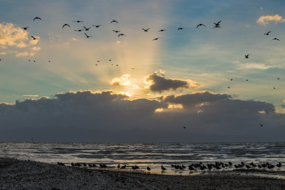 2-the-sea-bird-coast