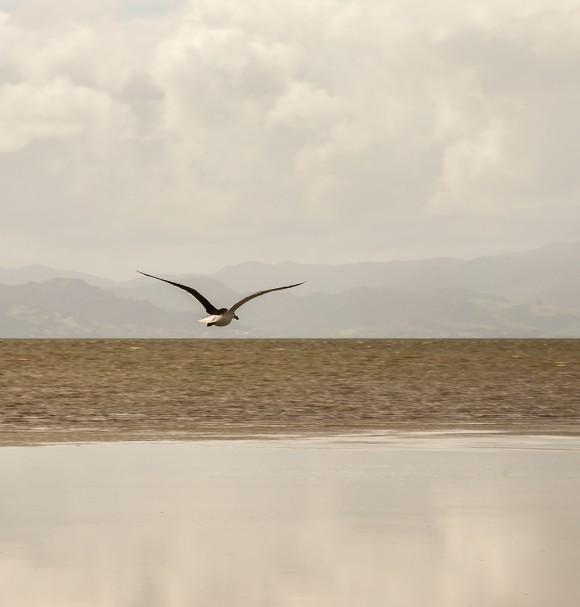 3-the-sea-bird-coast