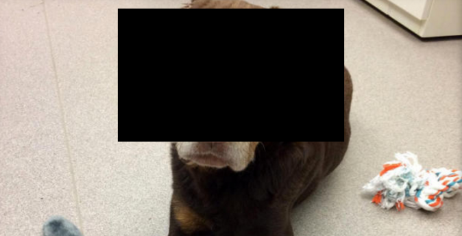 The dog in question. Note: Epoch Times added the  black square over the dog's head. (Michigan Human Society)