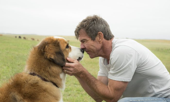 """This image released by Universal Pictures shows Dennis Quaid with a dog, voiced by Josh Gad, in a scene from """"A Dog's Purpose."""" (Joe Lederer/Universal Pictures via AP)"""