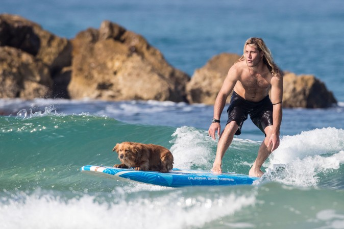 A surfer rides a wave with a dog as competitors take part in the men's qualifying series of the World Surf League SEAT Pro Netanya in the Israeli coastal city of Netanya on Jan. 19, 2017. (Jack Guez/AFP/Getty Images)