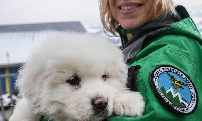 An Italian Forestry Corp officer officer holds one of three puppies that were found alive in the rubble of the avalanche-hit Hotel Rigopiano, near Farindola, central Italy, on Monday, Jan. 22, 2017. (Alessandro Di Meo/ANSA via AP)