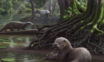 Researchers Identify Previously Unknown Species of Wolf-Sized Otter (Video)