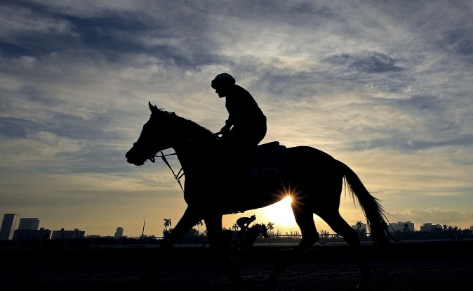 A horse works out ahead of the $12 Million Pegasus World Cup at Gulfstream Park in Hallandale, Fla., on Jan. 27. (Mike Ehrmann/Getty Images)