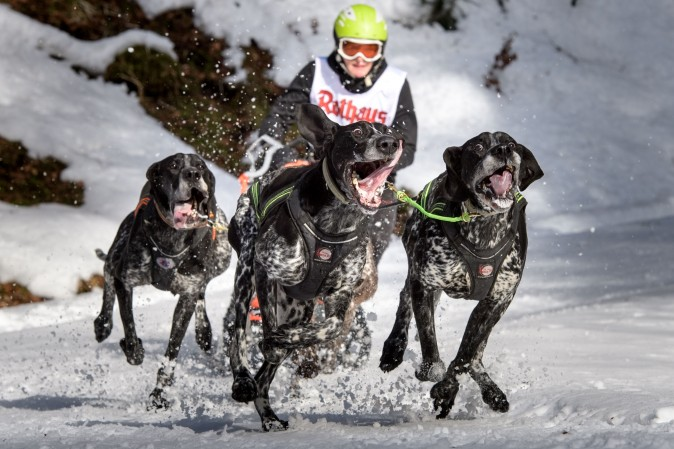 Dogs pull a competitor's sled during the 2017 International Dog Sled Races in Todtmoos, Germany, on Jan. 28, 2017. Over 100 mushers are competing in the two-day race deep in the Black Forest. (Thomas Lohnes/Getty Images)