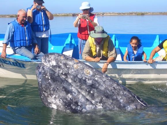 Whale watching on the Sea of Cortez. (Villa del Palmar Beach Resorts & Spa)