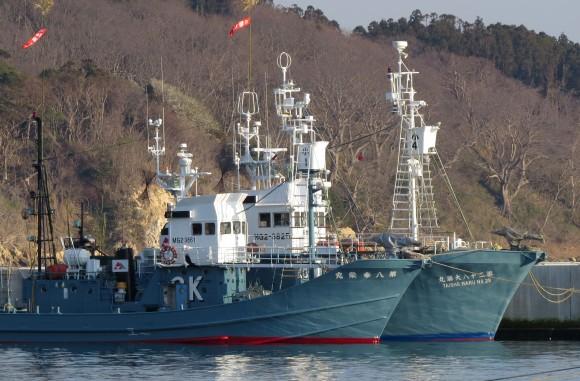 Japanese whaling ships are anchored at Ayukawa port in Ishinomaki on Apr. 25, 2014. (KAZUHIRO NOGI/AFP/Getty Images)