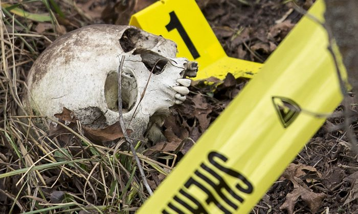 An evidence marker sits next to a human skull as Davis County search and rescue members and crime scene investigators search a hillside, for more evidence in Fruit Heights, Utah on Feb. 6, 2015. More police departments are amassing their own DNA databases, a move critics say is a way around stringent regulations governing state crime labs and the national DNA database. (Scott G Winterton/Deseret News via AP, File)