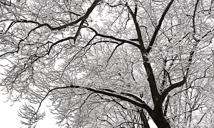 Central Park in New York on March 10, 2017. (Photo by Ceyda Erdinc)