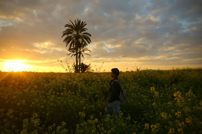 A young boy walks amidst wild mustard flowers in fields of Beit Hanun across the Gaza Strip on March 20, 2017. (Mohammed Abed/AFP/Getty Images)