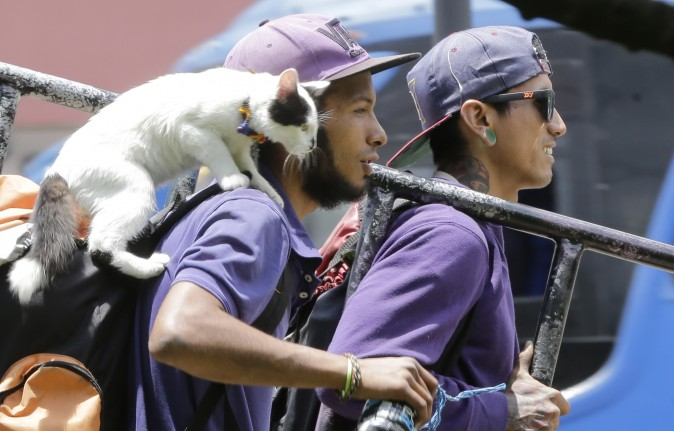 A couple of house painters and their cat walk to catch a bus to work in Quito, Ecuador, on March 22, 2017. The painters loaded their ladder aboard a public transportation bus along with their cat. (AP Photo/Dolores Ochoa)