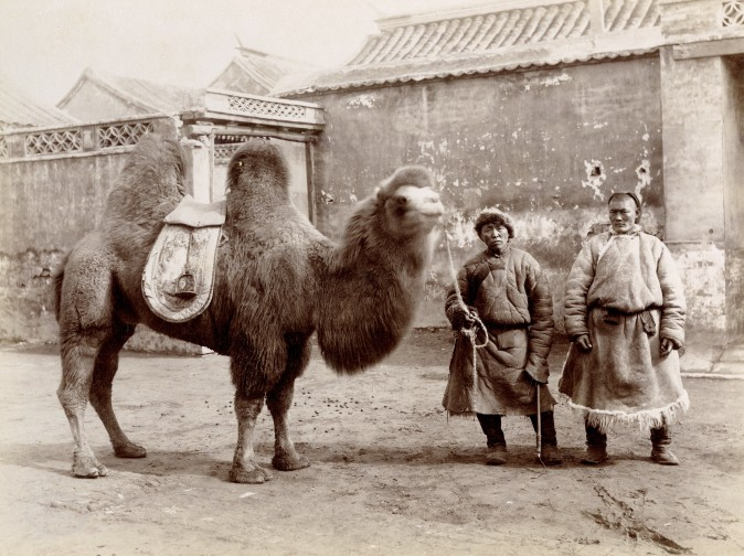"""A Bactrian Camel in Peking,"" circa 1890, by Sanshichiro Yamamoto. Albumen silver print. (Courtesy of Stephan Loewentheil)"