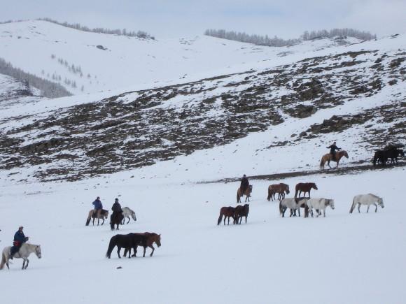 Mongolian Horses. (Vlatka Jovanovic)