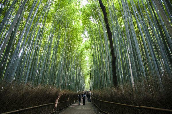 The bamboo forest in Arashiyama District. (Annie Wu/Epoch Times)