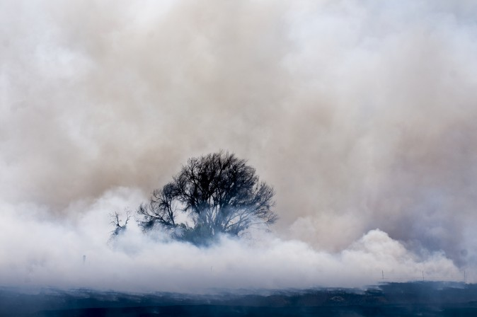 Smoke from the Narrows fire envelopes a burnt tree at Mojave Narrows Regional Park in Victorville, Calif., on March 30, 2017. (James Quigg/The Daily Press via AP)