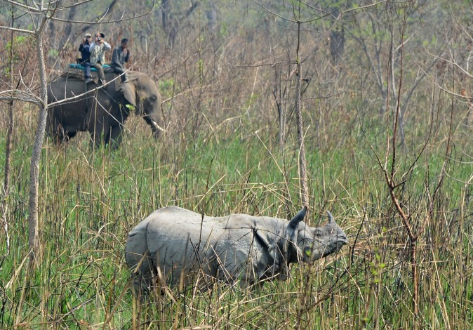 A veterinary and technical team prepare to dart a rhino at Chitwan National Park in Nepal on April 3, 2017. Conservationists captured a rare one-horned rhinoceros as part of an attempt to increase the number of the vulnerable animals, which are prized by wildlife poachers. Five rhinos, one male and four females, will be released in Nepal's far West in the hope of establishing a new breeding group. (Prakash Mathema/AFP/Getty Images)