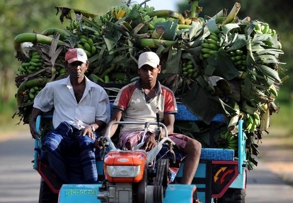 Sri Lankan farmers transport bananas in Suriyawewa in the southern district of Hambantota on February 22, 2011. AFP PHOTO/ Lakruwan WANNIARACHCHI (Photo credit should read LAKRUWAN WANNIARACHCHI/AFP/Getty Images)