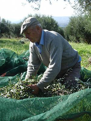 """According to UNESCO, the Mediterranean way of eating involves a set of """"skills, knowledge, rituals, symbols and traditions concerning crops, harvesting, fishing, animal husbandry"""" as well as conservation, processing, cooking and the way families get together to eat. (Courtesy UNESCO)"""