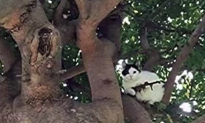 Police Called After Cat Lurking in Tree Appeared to be Holding Assault Rifle (Video)