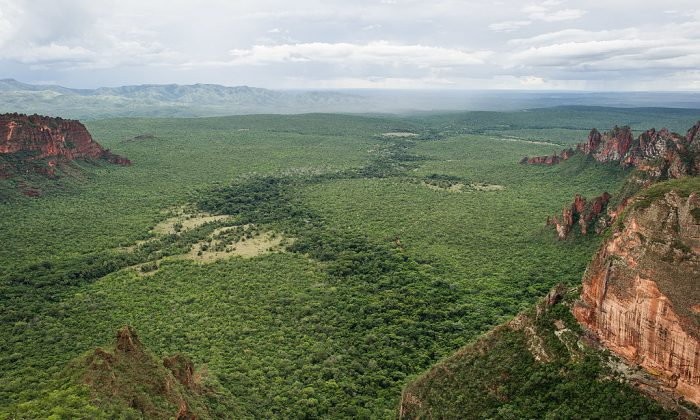 A file photo the Pantanal area in Chapada dos Guimaraes national park, Mato Grosso state, western Brazil.The Pantanal area, a sanctuary of biodiversity, has been at risk of commodity related deforestation. (Yasuyoshi Chiba/AFP/GettyImages)