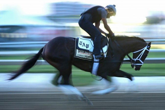 Kentucky Derby winner Always Dreaming runs on track during a training session for the upcoming Preakness Stakes at Pimlico Race Course in Baltimore, Md., on May 18, 2017. (Patrick Smith/Getty Images)