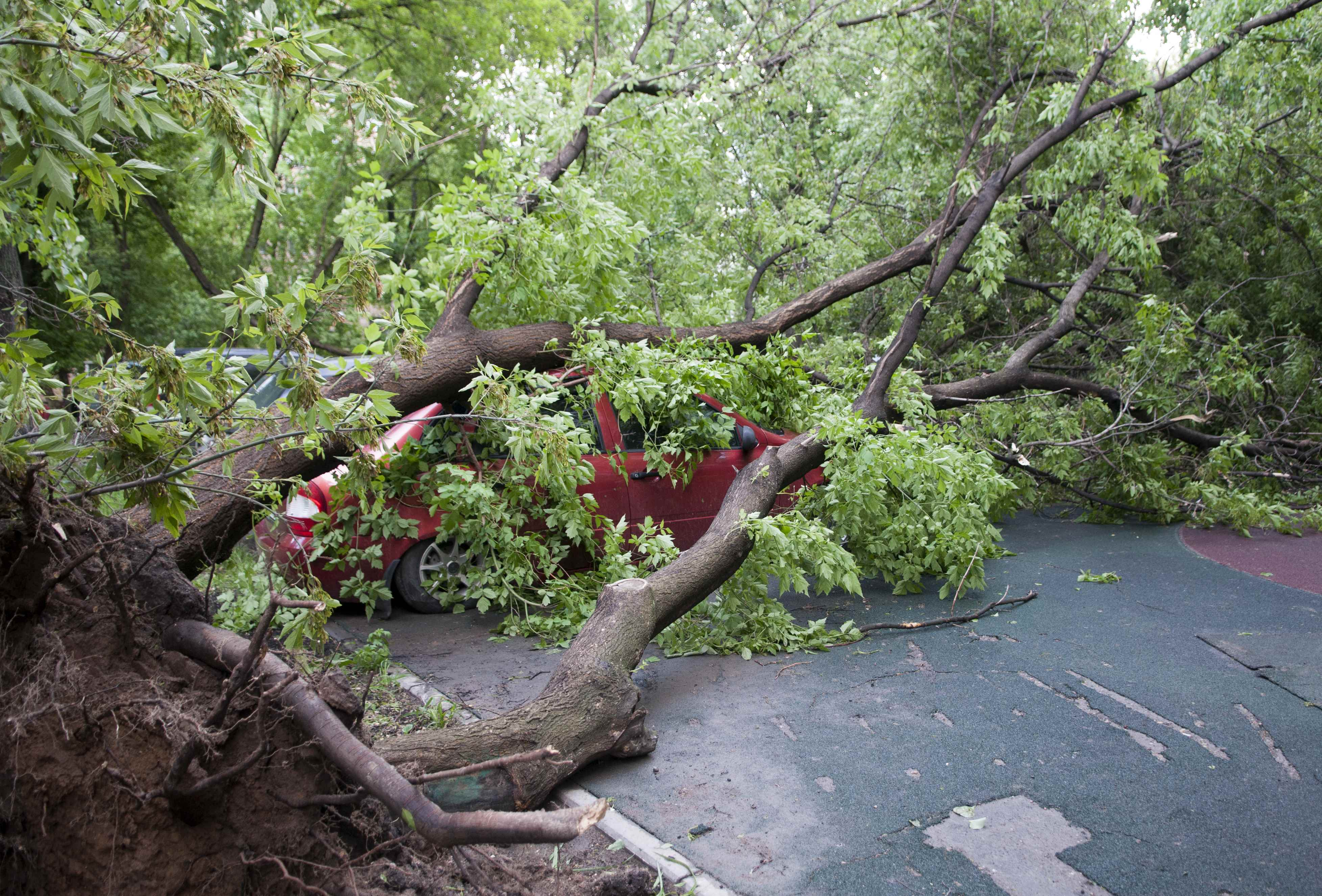 A tree, which was uprooted by a heavy storm and fell down on a car, in Moscow, Russia on May 29, 2017. (REUTERS/Andrey Kuzmin)