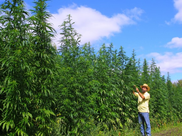 Jan Slaski says Canada's hemp industry is developing rapidly, projecting more than 130,000 acres of industrial hemp will be grown in Canada in 2017, a substantial gain from the 76,000 acres planted in 2016. (Courtesy of Jan Slaski)