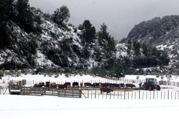 A herd is seen, after great snowfall at the outskirts of Coyhaique city, south of Chile  June 16, 2017. REUTERS/Alvaro Vidal
