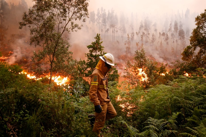 A firefighter works to put out a forest fire near the village of Fato, central Portugal on June 18, 2017. (REUTERS/Rafael Marchante)