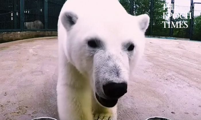 (Video Screenshot)