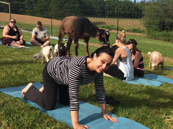 Goat yoga at Emerson Vineyards in the Willamette Valley. (Beverly Mann)