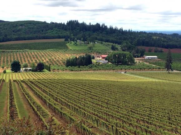 Vineyards in the scenic Willamette Valley. (Beverly Mann)