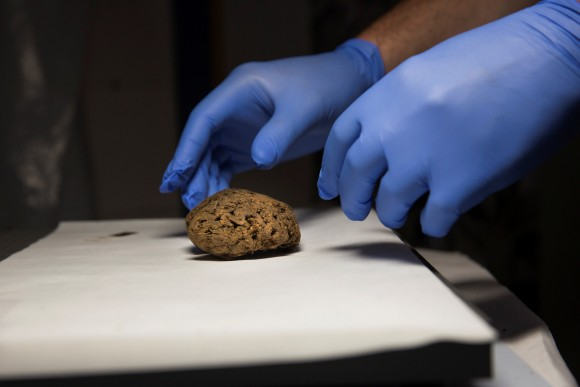 One of the 45 brains saponified of those killed by forces of the dictator Francisco Franco, found in 2010 in a mass grave around the area known as La Pedraja, is shown at a laboratory in Verin, Spain, June 8, 2017. (Reuters/Juan Medina)