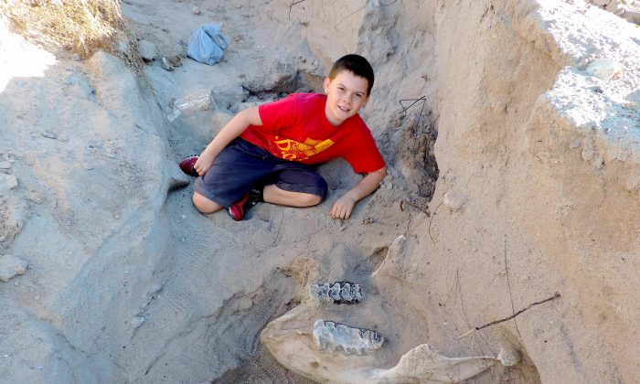 Jude Sparks poses with the jawbone of a stegomastodon he discovered while hiking in the desert in Las Cruces, N.M., with his family. (Peter Houde)