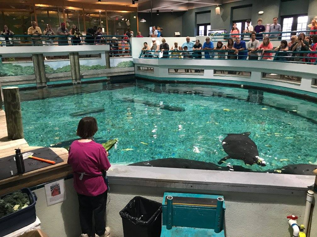 Photo of the habitat where Snooty lived taken on the manatee's 69th birthday on July 22, 2017. (South Florida Museum)